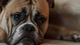 por qué mi perro está triste